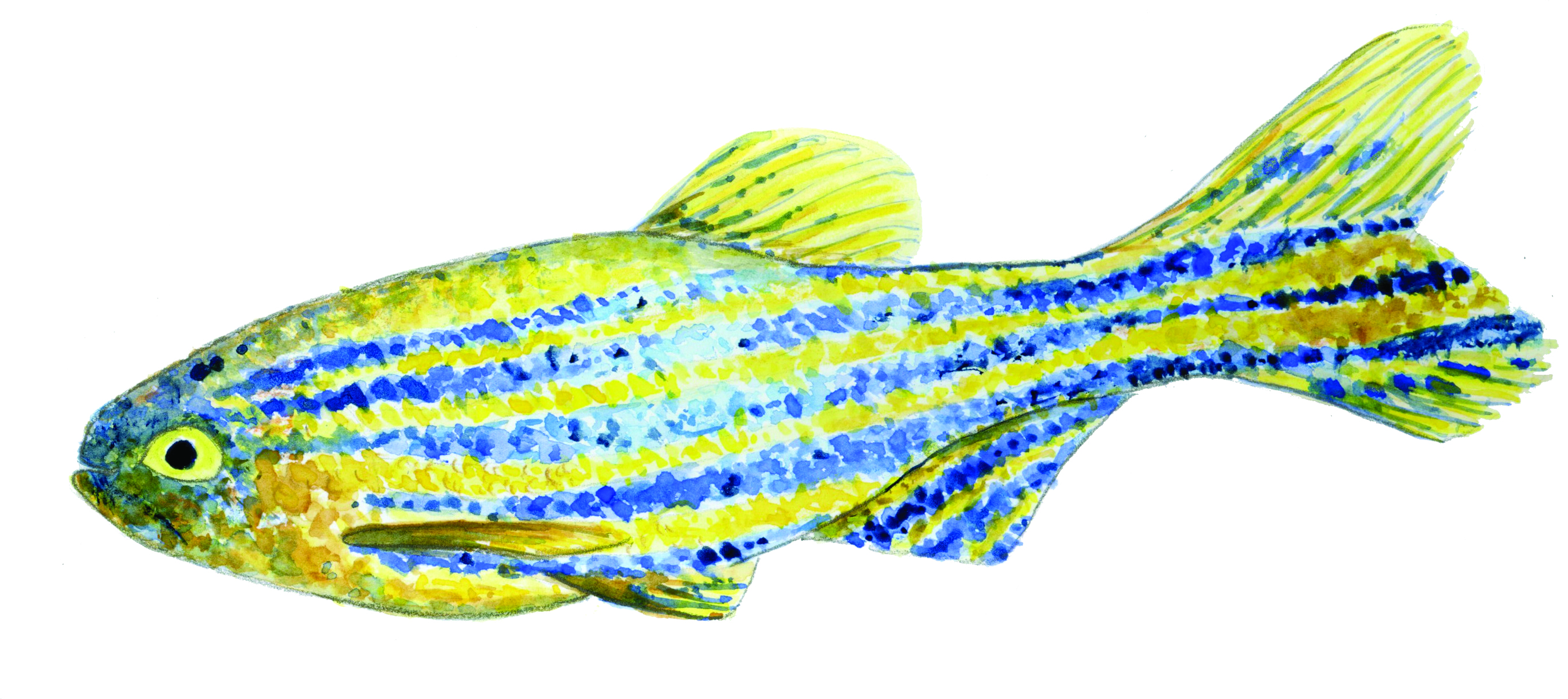 Why give you can change lives exceptional care for Can fish have seizures